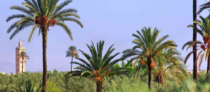 RIAD COCOON MARRAKECH | riad luxe medina, palmier, Marrakech Riad_Cocoon